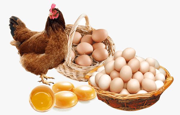 Trứng và thịt gà là khắc tinh của bệnh viêm da