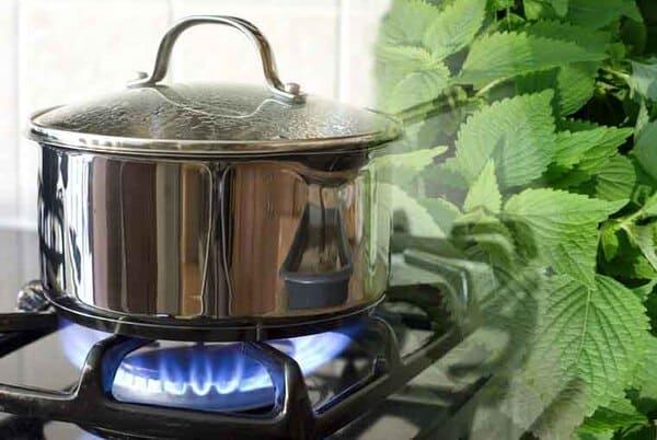 Nước kinh giới có thể sử dụng thay thế dầu tắm gội mỗi ngày