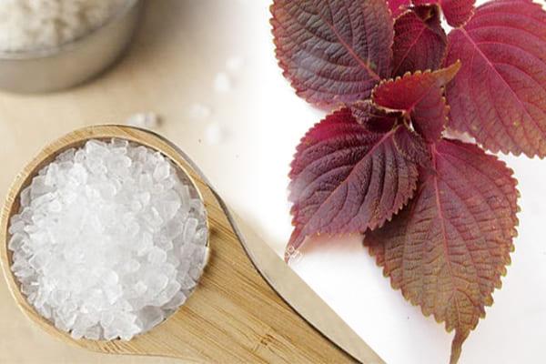 Tắm lá tía tô cùng muối giúp điều hòa vùng da bệnh mề đay