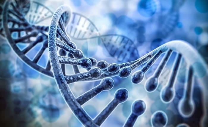 Bệnh tổ đỉa có tỉ lệ di truyền lên đến 50%